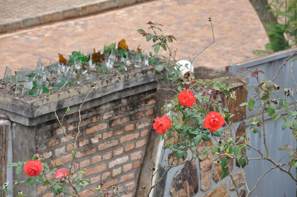 Kontraster, vackra blommor och krossat glas