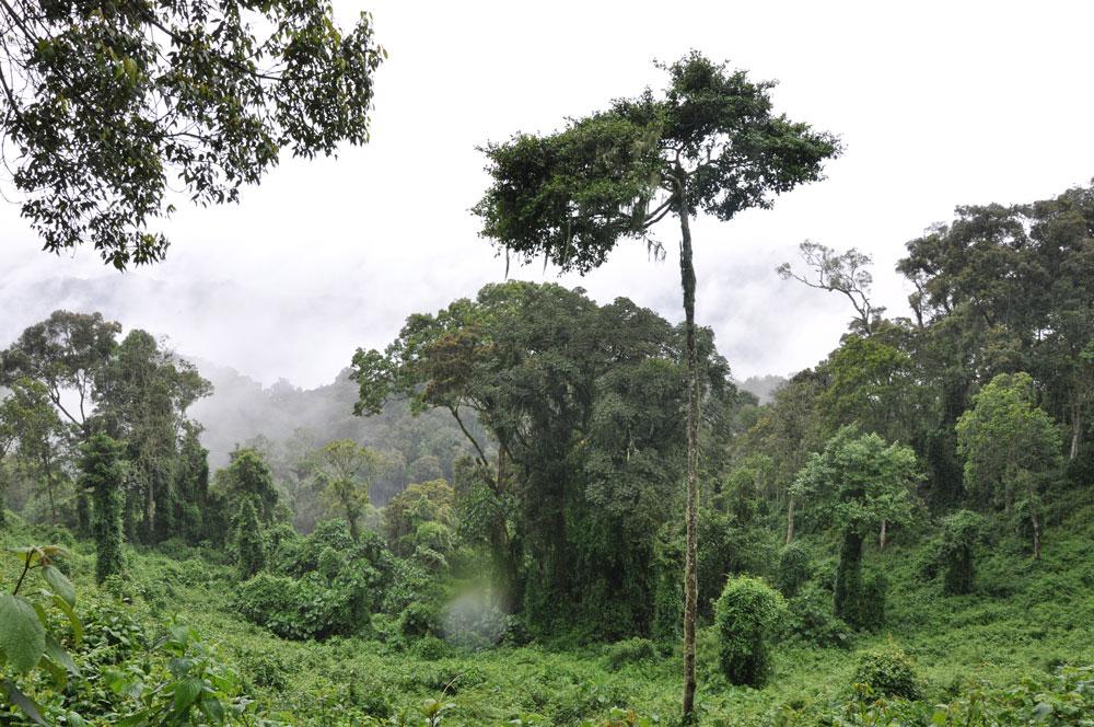 Vy över regnskogen